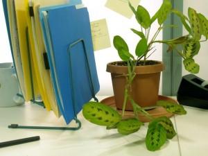 plant on lynn dye website