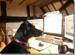 dogi n front of computer